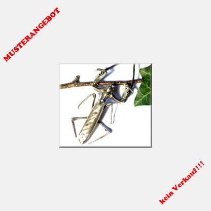 Gottesanbeterin, Anhänger aus 925 Silber, Insekt, Mantis, Gothic,Käfer